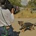Filming a Police Attack Dog
